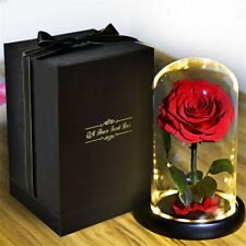 Eternal Real Rose Preserved Flower The Little Prince In Dome WIth Gift Box