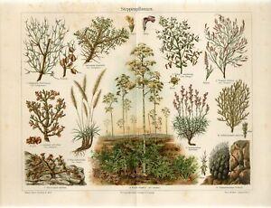 1895 STEPPE PLANTS FLOWERS CACTUS Antique Chromolithograph Print