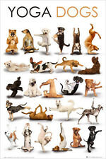 YOGA DOGS POSTER (61x91cm)  PICTURE PRINT NEW ART