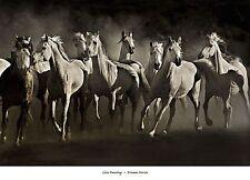 HORSE ART PRINT Dream Horses Lisa Dearing