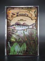 Blechschild Zander Raubfisch Fisch Angeln Angler Fischer Metall 30cm,Metal