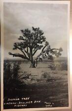 RPPC Arizona AZ Wonders Of Desert Cactus Joshua Tree Kingman Hwy By Gallup C1925