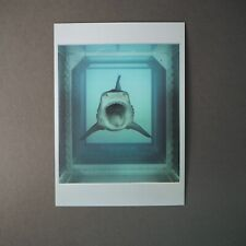 Damien Hirst Art Shark Physical Impossibility Of Death Postcard