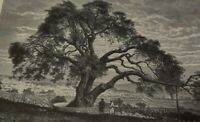 1910 ABRAHAM'S OAK TREE Print OT Bible De Bar Dwelling Place in Hebron