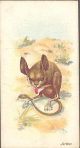 Players - Wild Animals of the World, 'issued by', no 'branch' - Jerboa
