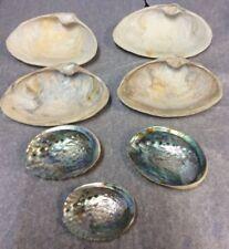 "Sea Shell Lot  7 Shells 6 1/2"" to 3 1/2"" Ocean Craft Supply Art FoundArtShop.com"