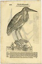 Antique Print-ANIMAL-BIRD-HERON-ALDROVANDI-Coriolano-1599