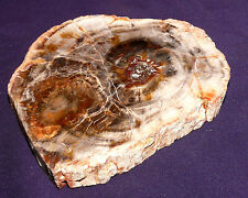 Scheibe versteinertes Holz Madagaskar 337,1g 110x96x15mm Kamin-Ofen-Deko