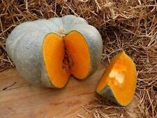 Pumpkin Seeds  Volzhsky Gray. Large Heirloom Vegetable Seed from Ukraine