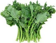 Heirloom BROCCOLI RAAB EARLY FALL RAPINI Rabe❋1000 Seeds❋Asparago❋Non GMO
