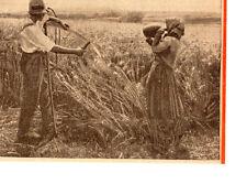 IMAGE 130 PRINT AGRICULTURE AFFUTAGE DE LA FAUX