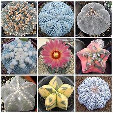 10 Stück/Pack Sukkulenten Kaktus Kakteen Gemischte Samen Feigenkaktus Pflanzen