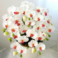 White Orchid Seeds Rare Orchid Seeds Phalaenopsis Orchid Bonsai Orchid Flower