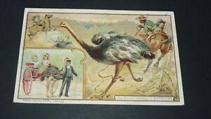 CPA CARTE POSTALE 1909-1910 PUBLICITE CHICOREE LEROUX GRANDES CHASSES AUTRUCHE