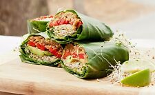 Vegan & Vegetarian Cookbook Ebooks in PDF on CD! FREE SHIPPING