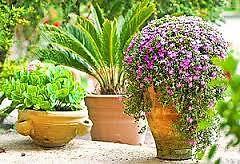 Jardines de Jaravia