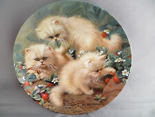 Persian Cats Strawberries Cream Collector Plate Amy Brackenbury Knowles Sm Chip