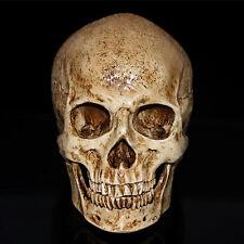 Hot Sale Retro Human Skull Replica Resin Model Medical Lifesize Realistic 1:1