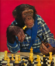 1959 Vintage MONKEY HUMOR Chimpanzee CHESS Tobacco Pipe Smoking Animal Photo Art