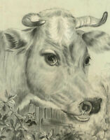 Mid 19th Century Graphite Drawing - The Gentle Cow