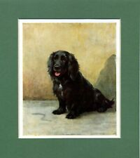 Maud Earl ~ Cocker Spaniel ~ Gundog. Colour Print Genuine Vintage 1929
