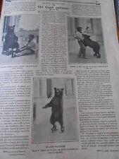 Un Ours Patineur La fureur des Music Halls Old Print 1911