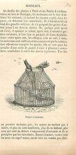 Panier Osier Cage Piège à Moineaux Paris France GRAVURE ANTIQUE OLD PRINT 1877