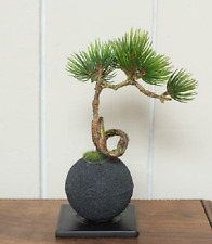 Bonsai Replica Mini Pine Tree with Bamboo Charcoal boll for interior from Japan