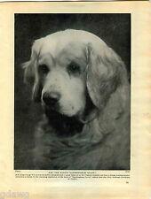 1930 Book Plate Print Clumber Spaniel Sandringham Spark Witley Acting Donovan