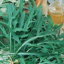 Herb Wild Rocket Diplotaxis tenuifolia 0.5g Approx1000s