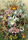 Heirloom Flower Photo Prints Old Plants Garden Bulbs Rare, Orchids, Iris, Roses