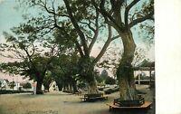 Postcard Salem Willows, MA