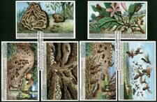 Ants Fourmis Mieren Insects 6 1920s Trade Ad Cards