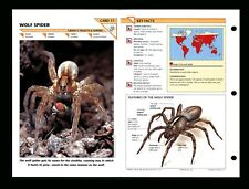 Wolf Spider Wildlife Fact File Insect & Spider Card Home School Study 5.17