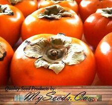 (5) Japanese Persimmon Fruit Tree Seeds - Diospyros kaki - Combined S&H