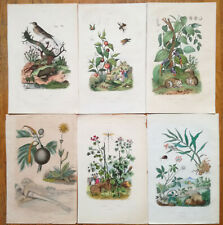 Guerin: Original Handcolored Print Botany Lot of 6 Prints (F) - 1838#