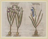 JOHN GERARD BOTANICA MATTHIOLI ORIGINALE 1597 GLADIOLO GLADIOLUS