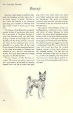 "The Basenji - Vintage Dog Art Print - Matted ""G"""