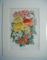 Antique c1880 Chromolithograph Botanical Floral Print ~ BEDDING FLOWERS