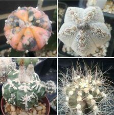 Astrophytum  Semillas/seeds Mix 100