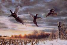 "Spooked By Jim Hansel Pheasant  Print Image Size 18"" x 10.5"""