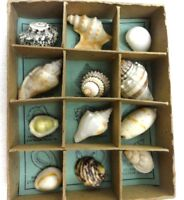 Vtg Collection Ocean Treasures 12 Species of Shells From Around the World c1951