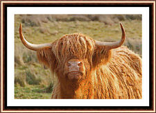 Highland Cow 05 CROSS STITCH KIT