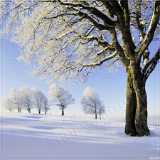 Christmas/Winter 10'x10'Computer-painted Scenic Photo Background Backdrop BHF076