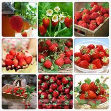 9 variétés de graines fraises  rouges bio, pack professionnel, 100 graines