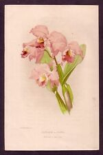 Antique Cattleya Labiata Orchid Flower Chromolithograph Botanical Art Print