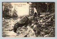 Berea OH, A Scene of The Rocks, River, Woods, Ohio, Vintage Postcard Z25