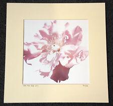 """Prueba de artista impresión AP1 'Bebé Rosa Rosa """"desde una acuarela por SM/06"""