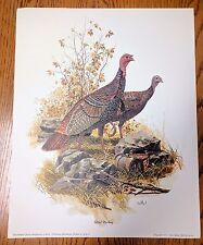 Wildlife Eaton Veterinary Prints by Don Balke Wild Turkey 1975 Print USA Vintage