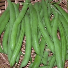 1 Lb Harvester Green Bush Bean Seeds - Everwilde Farms Mylar Seed Packet